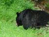 2012-0715-big-bear-header