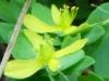 2012-0802-wildflower-header