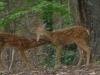 2012-0804-fawns-header