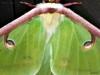2014-0331-luna-moth