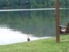 2013-0627-duck-spillway-swing