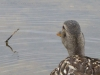 2013-0627-duck-bath-13-spillway
