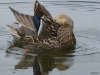 2013-0627-duck-bath-42