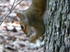 2012-0606-squirrel-mushroom-2.jpg