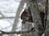 2015-0218-snow-wind-squirrel.jpg