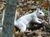 2016-1016-white-squirrel.jpg