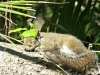 2017-0407-squirrel-napping-0.jpg