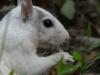 2017-1013-white-squirrel-closeup.jpg