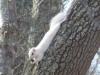 P1600240-2017-02-24-white-squirrel-2187x1640.jpg