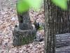 2015 0419 woodpecker 1.JPG